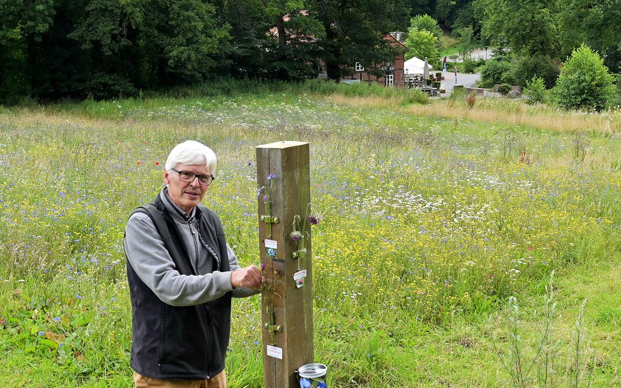 Ulf Feuerstein tauscht noch die Kräuter an der Infosäule am Heiligenberg aus. Eine Blumenwiese für Insekten